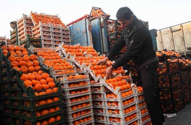 قیمت مرکبات در میادین میوه و ترهبار نصف قیمت سطح شهر است