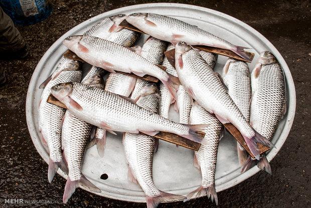 سرانه مصرف ماهی در ایران، نصف جهان است