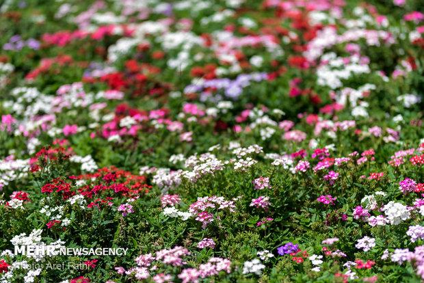 دورههای آموزشی بهاره کاشت و پرورش گل و گیاه در جنوب پایتخت
